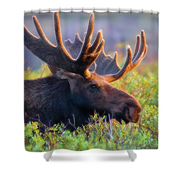 Shower Curtain featuring the photograph Eye Contact by John De Bord