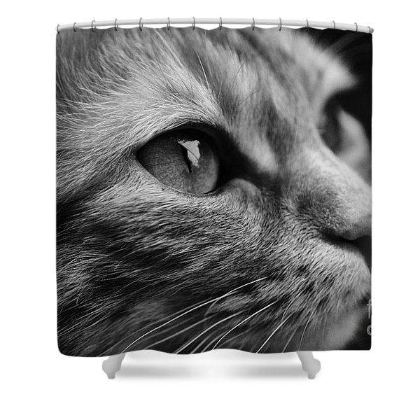 Eye Of The Cat Shower Curtain
