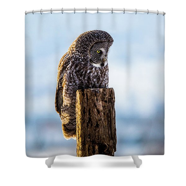 Eye On The Prize - Great Gray Owl Shower Curtain