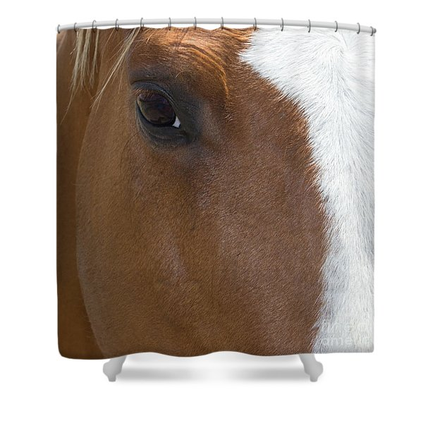 Eye On You Horse Shower Curtain