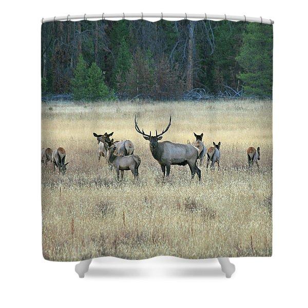 Faabullelk110 Shower Curtain