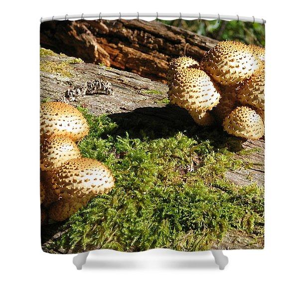 Fabulus Fungi Shower Curtain