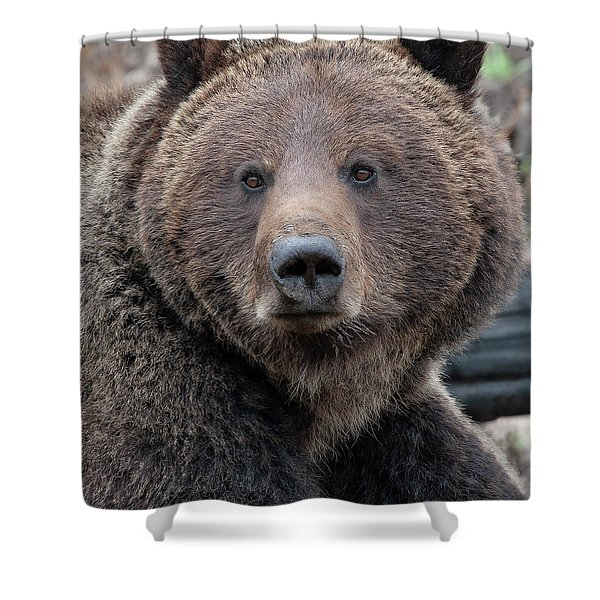 Face Of The Grizzly Shower Curtain