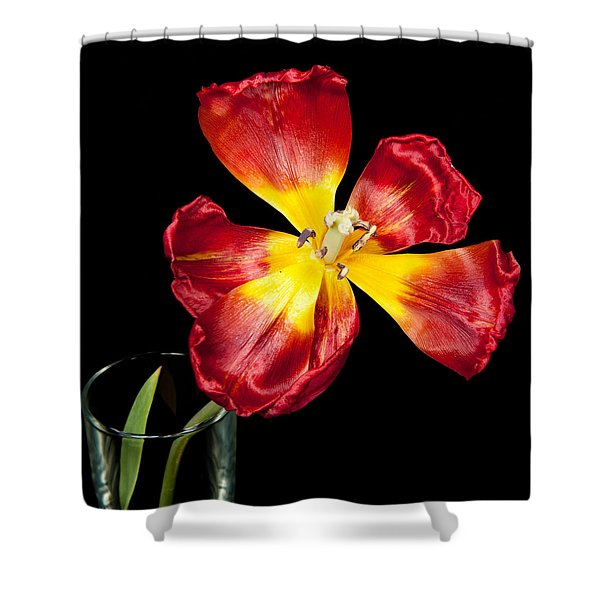 Fading Beauty Shower Curtain