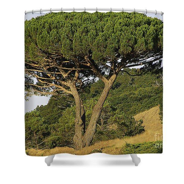 Fairfax Beauty Shower Curtain