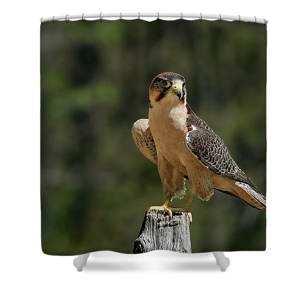 Shower Curtain featuring the photograph Falcon by Ronnie and Frances Howard
