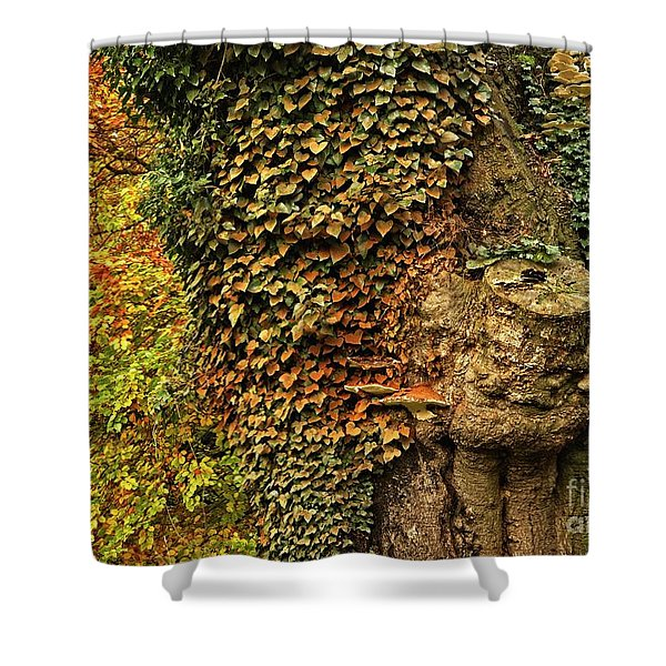 Fall Colors In Nature Shower Curtain