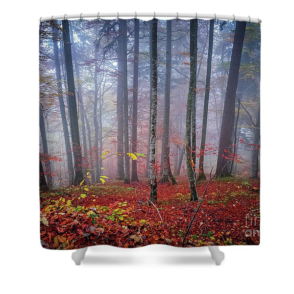 Fall Forest In Fog Shower Curtain