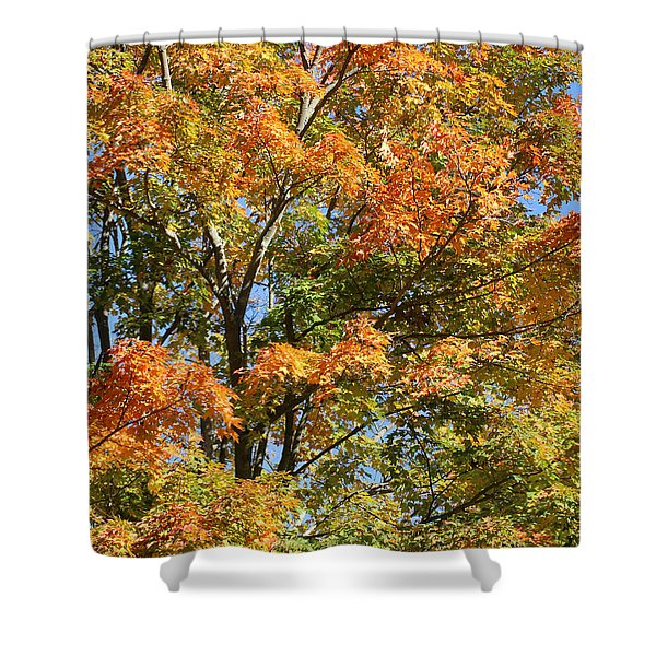 Shower Curtain featuring the photograph Fall Gradient by William Selander