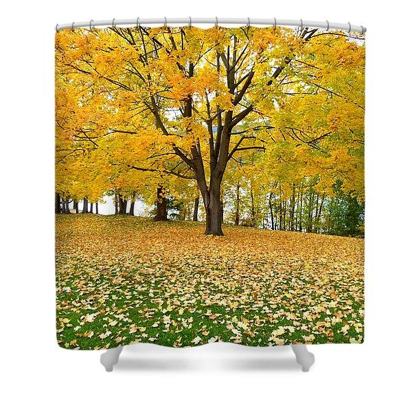 Fall In Kaloya Park 7 Shower Curtain