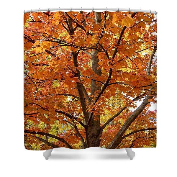 Fall In Kayloya Park 2 Shower Curtain