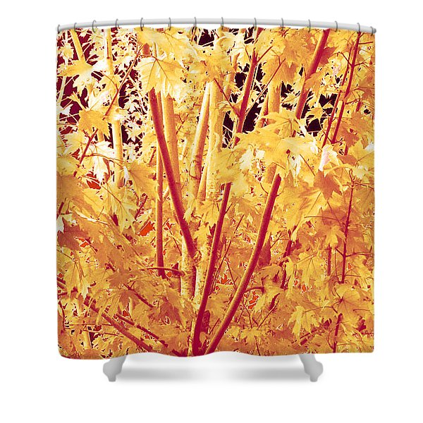 Fall Leaves #1 Shower Curtain