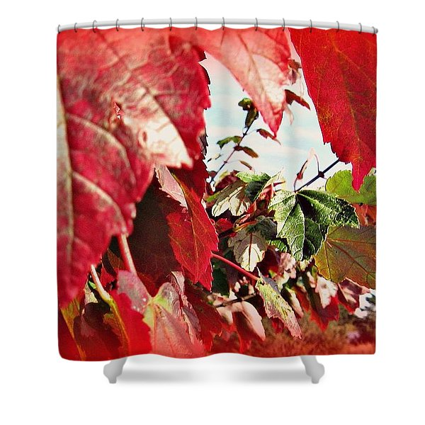 Fall Leaves #10 Shower Curtain