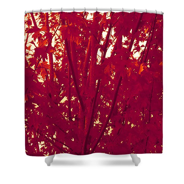 Fall Leaves #2 Shower Curtain