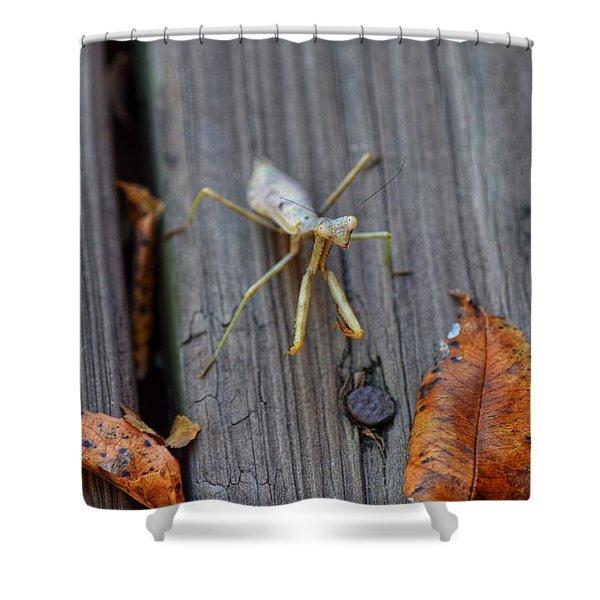Fall Mantis  Shower Curtain