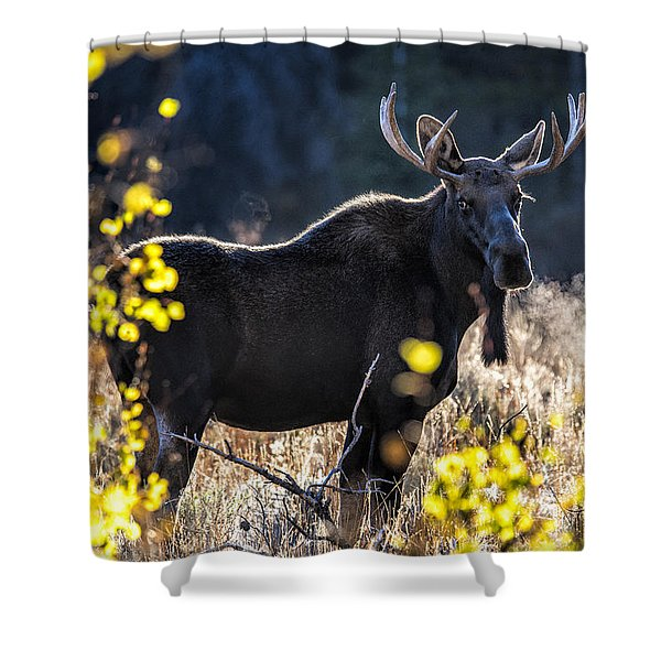 Fall Moose Shower Curtain