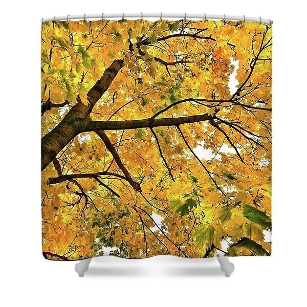 Fall On William Street Shower Curtain
