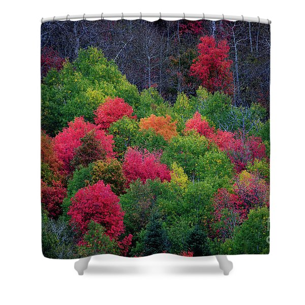 Fall Poppers Shower Curtain