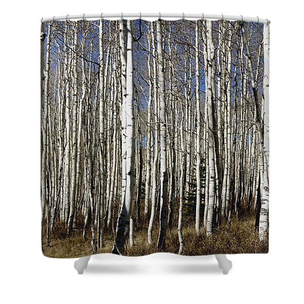 Fall Quaking Aspens Panorama Shower Curtain