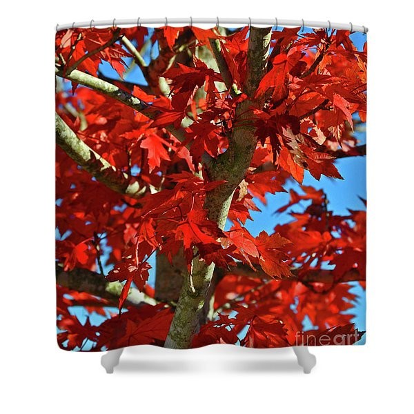 Fall Stars Shower Curtain