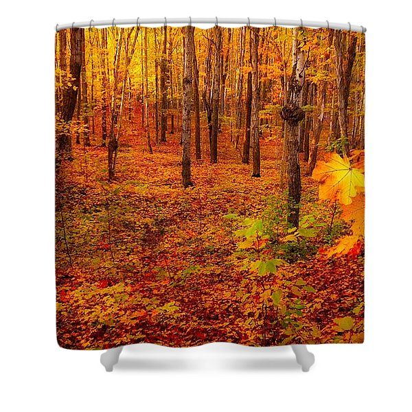 Fall Sugar Bush Shower Curtain