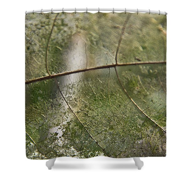 Shower Curtain featuring the photograph fallen Leaf by Debbie Cundy