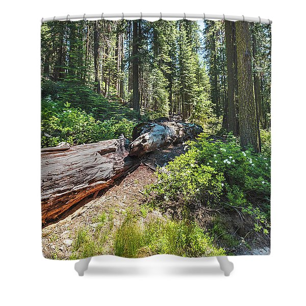 Fallen Tree- Shower Curtain