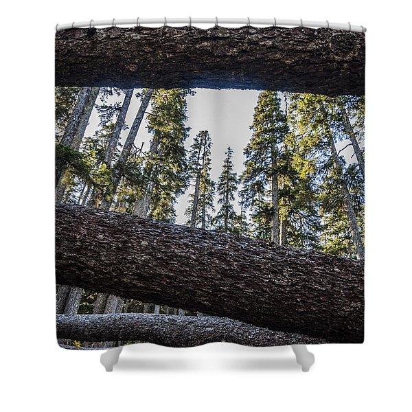 Fallen Trees Shower Curtain