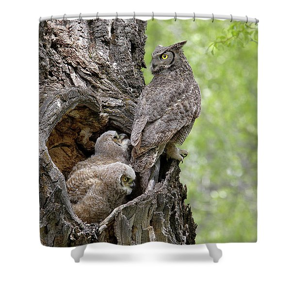 Shower Curtain featuring the photograph Family by Ronnie and Frances Howard