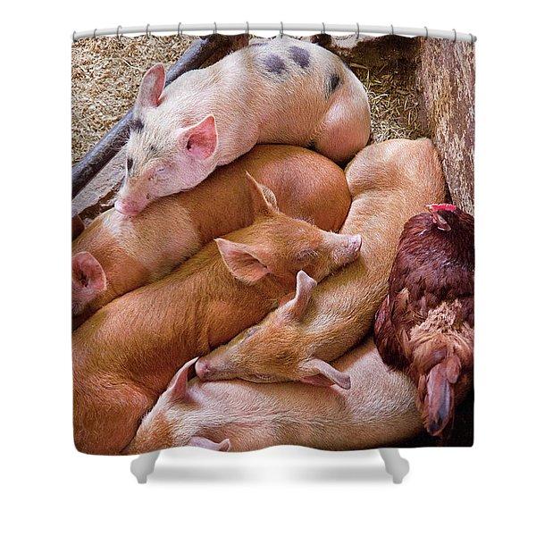 Farm - Pig - Five Little Piggies And A Chicken  Shower Curtain