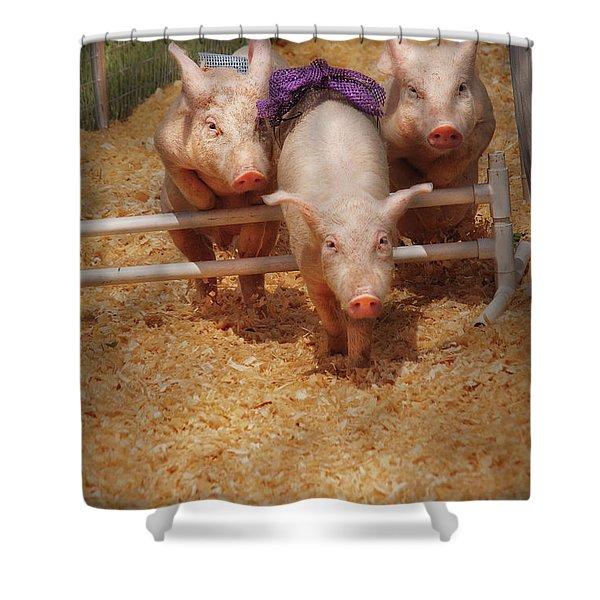 Farm - Pig - Getting Past Hurdles Shower Curtain