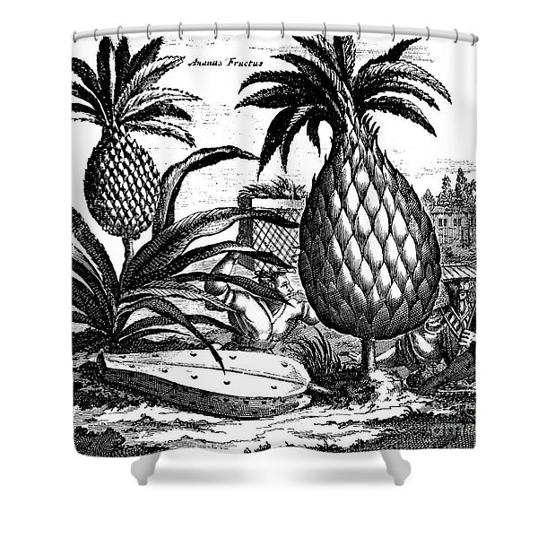 Farming Large Pineapples, Illustration From A Description Of Embassies To China, 1690  Shower Curtain