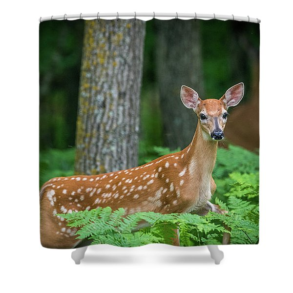 Fawn In Ferns Shower Curtain