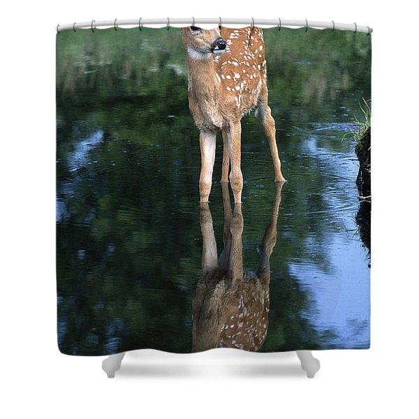 Fawn Reflection Shower Curtain
