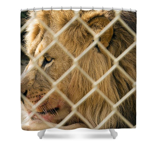 Feast For A King Shower Curtain