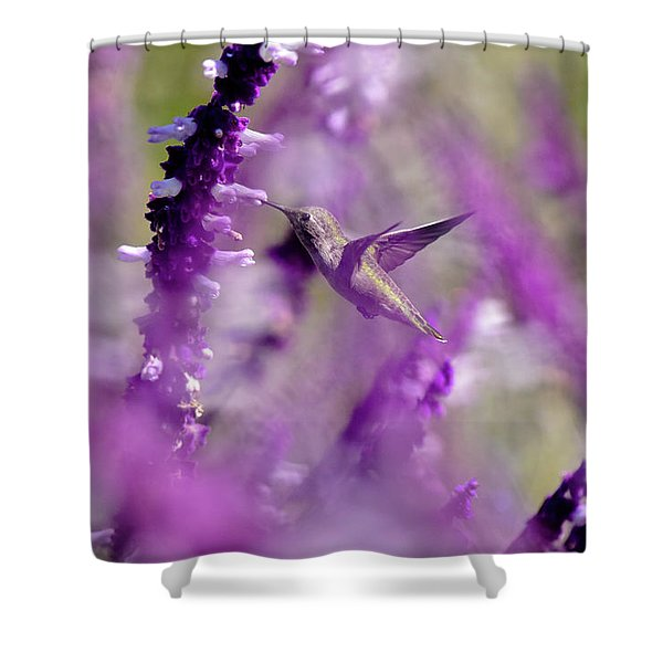 Feeding In The Midst Of Purple 1 Shower Curtain
