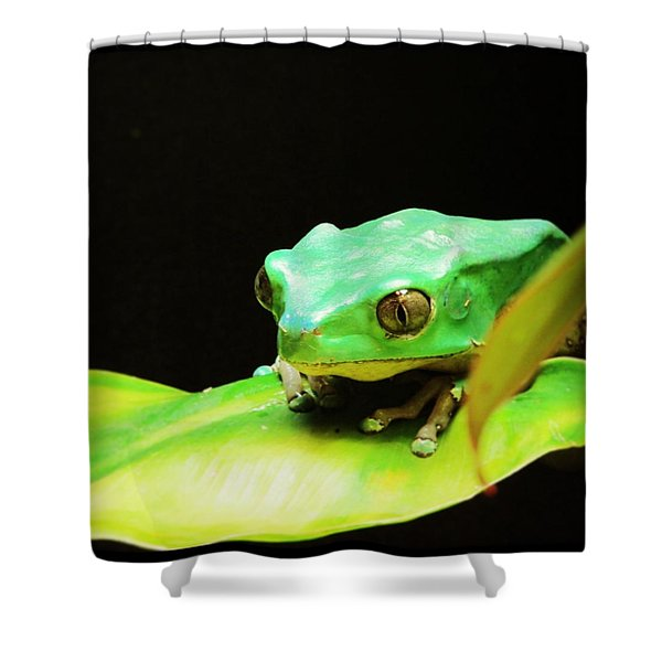 Feeling Froggy Shower Curtain
