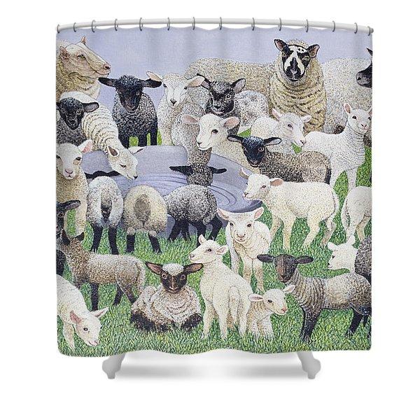 Feeling Sheepish Shower Curtain
