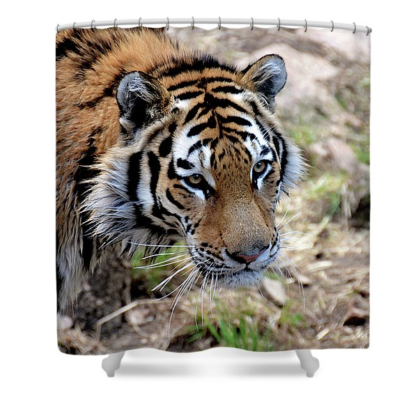 Feline Focus Shower Curtain