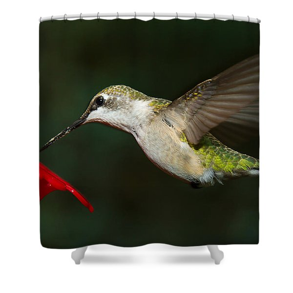 Shower Curtain featuring the photograph Female Ruby-troated Hummingbird by Robert L Jackson