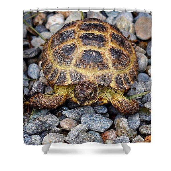 Female Russian Tortoise Shower Curtain