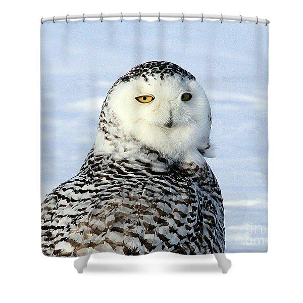 Female Snowy Owl Shower Curtain