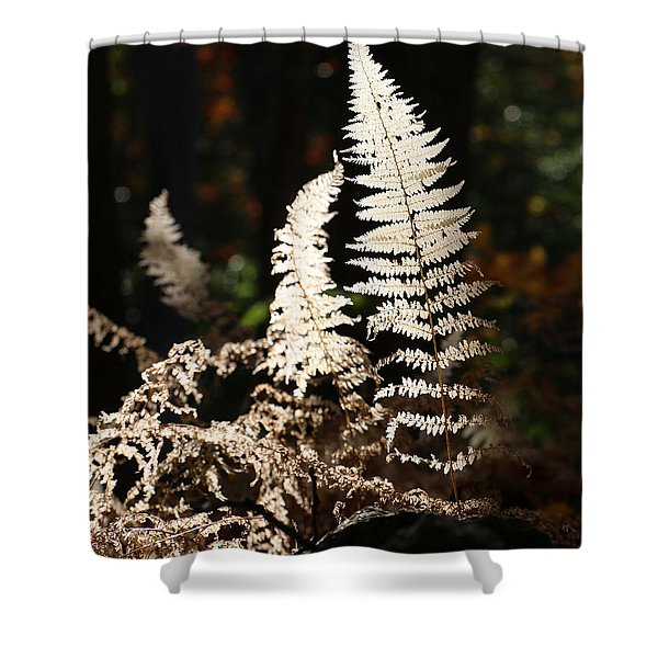 Shower Curtain featuring the photograph Fern Glow 2 by William Selander