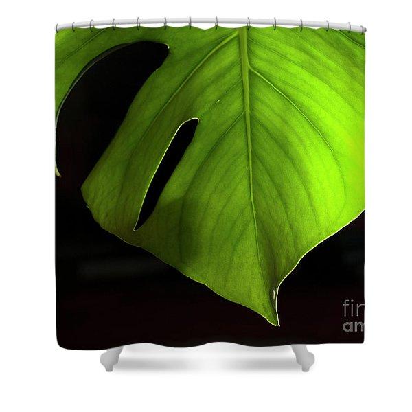 Fhgreen Shower Curtain