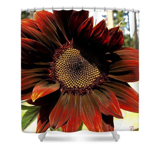 Fibonacci Hues Shower Curtain