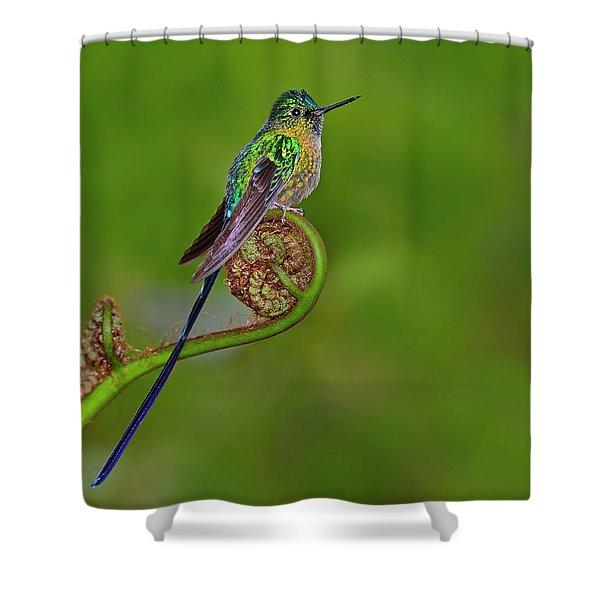 Fiddling Around Shower Curtain