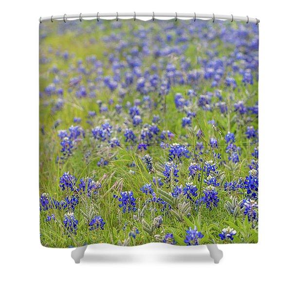 Field Of Blue Bonnet Flowers Shower Curtain