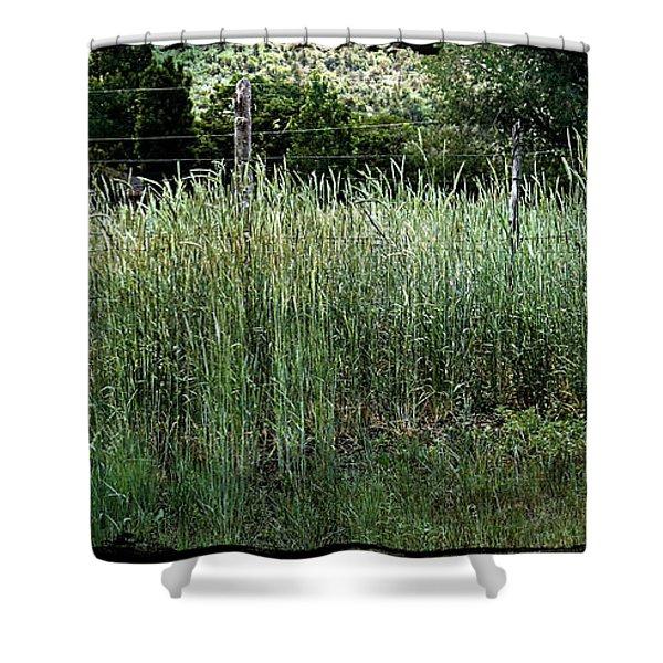 Field Of Grass Shower Curtain