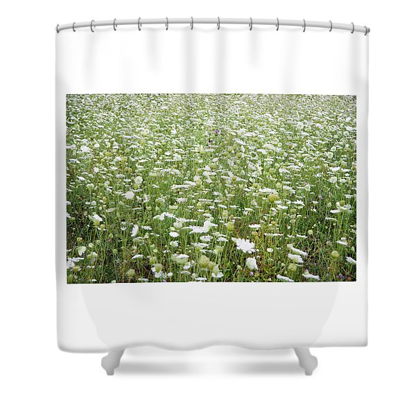 Field Of Queen Annes Lace Shower Curtain