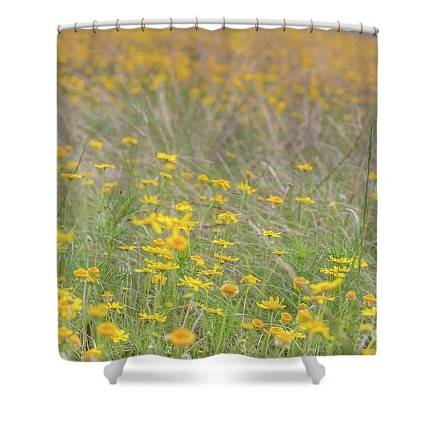 Field Of Yellow Flowers In A Sunny Spring Day Shower Curtain